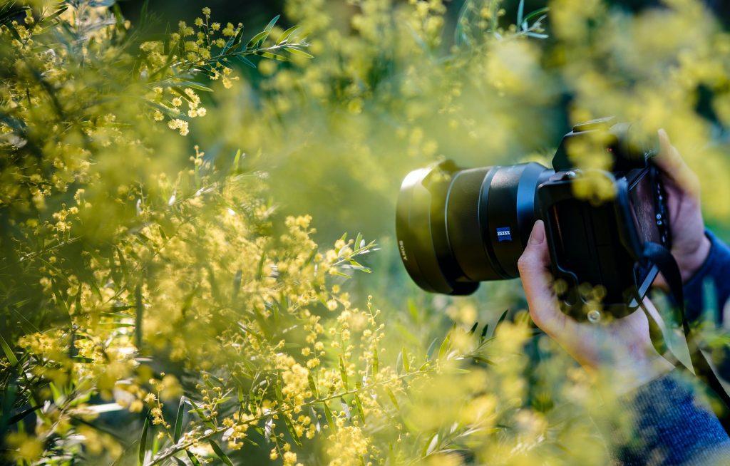 photographe avec appareil photo devant des fleurs jaunes