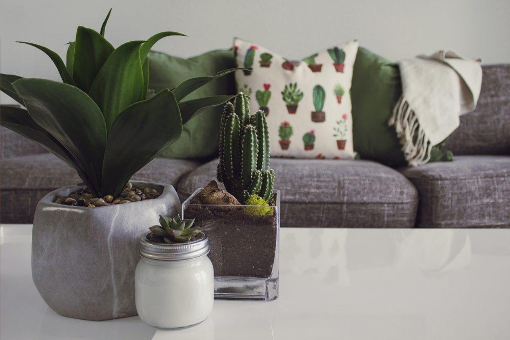 décoration d'intérieur avec canapé et plantes